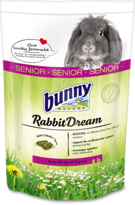 Bunny RabbitDream Senior